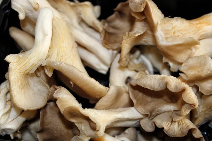 Austernpilze zubereiten - Pilzpfanne