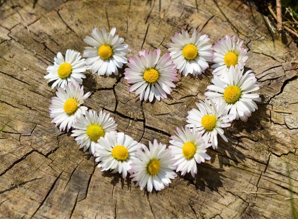 Bedingungslose Liebe - Herz für die Natur